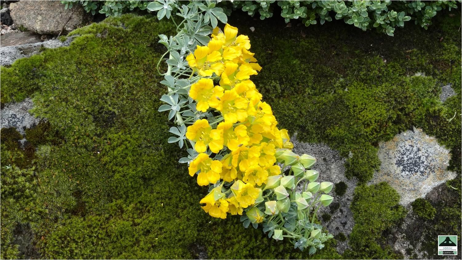 Jardin d 39 altitude du haut chitelet joadvisor - Jardin d altitude du haut chitelet ...